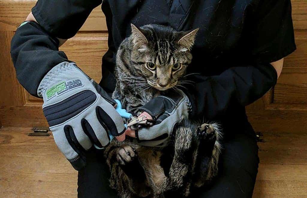 Dr. Laura Trimming Cat Nail