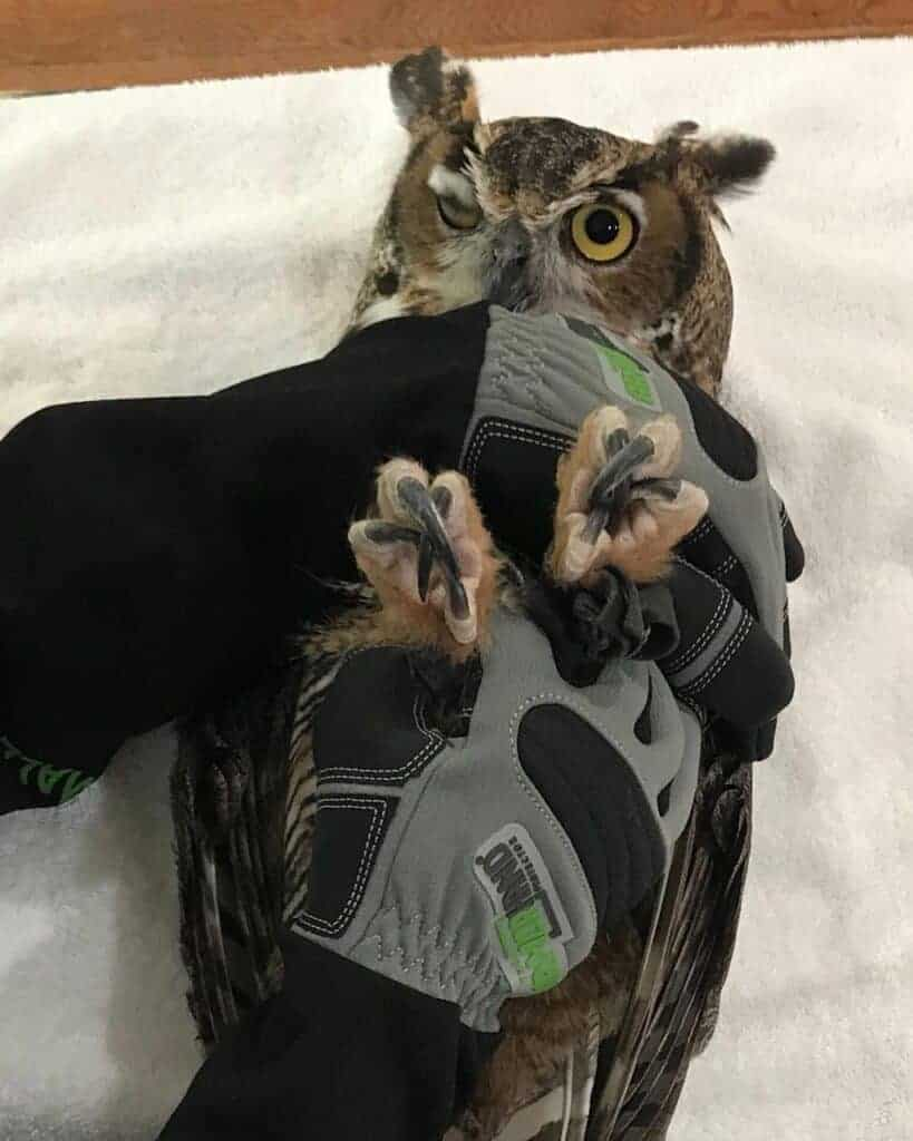 Ah Gloves Restraining Owl