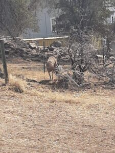 Buck Rescue Pic01