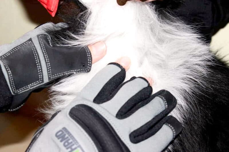 Product Armor Hand Glove Inspecting Dog