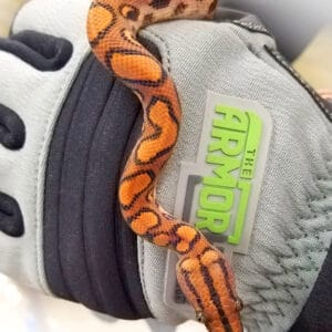 Product Armor Hand Glove Snake