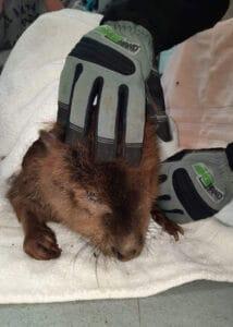 armor hand beaver rescue 01