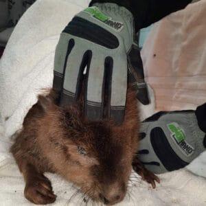 armor hand beaver rescue feature