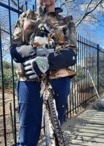 armor hand exotic pheasant rescue 01