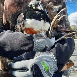 armor hand exotic pheasant rescue feature