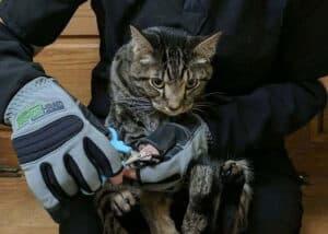 armor hand feline patients 02