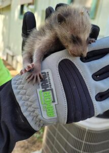 armor hand baby raccoon rescue 01