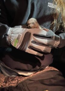 armor hand baby raccoon rescue 02