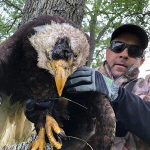 armor hand bald eagle rescue feature