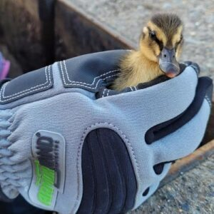 armor hand newborn ducklings rescue feature