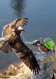 armor hand osprey rescue 01