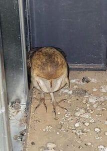 armor hand owl rescue 01