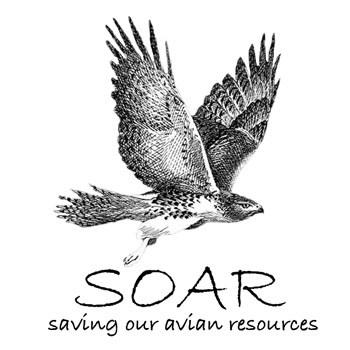 soar logo white