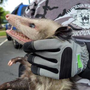 armor hand opposum rescue hbc feature