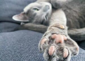 declawing feature