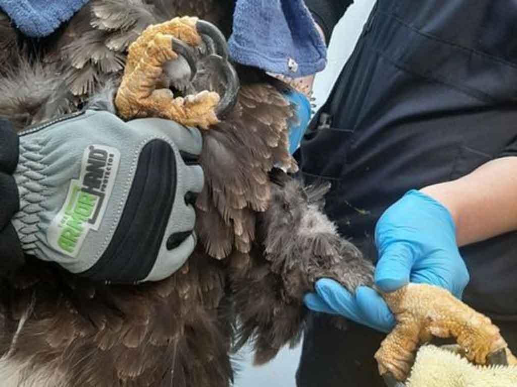 eagle holding