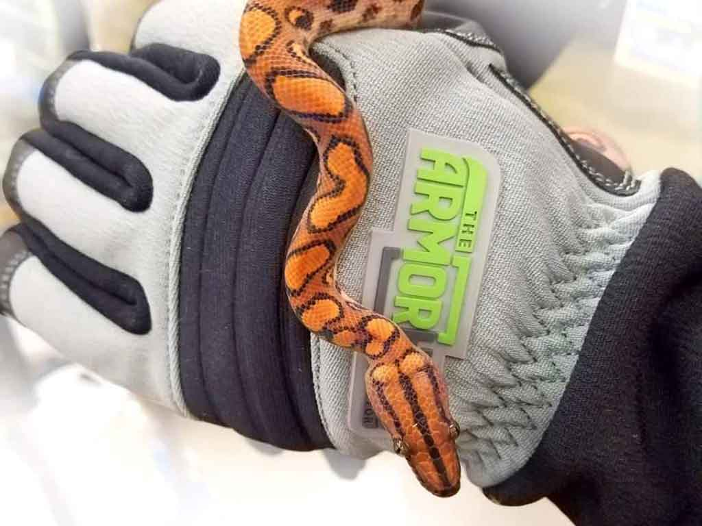 snake holding