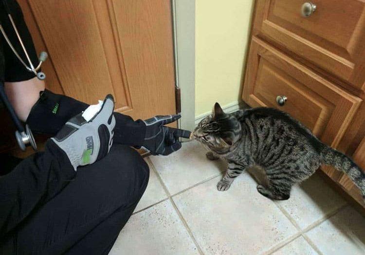 armor hand feline patients 01